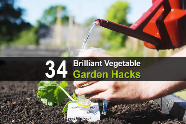 34 Brilliant Vegetable Gardening Hacks