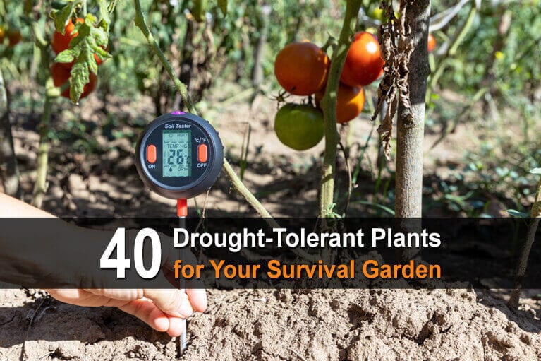 40 Drought-Tolerant Plants for Your Survival Garden