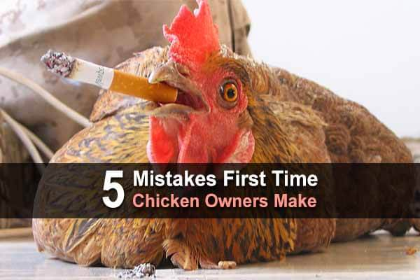 5 Mistakes First Time Chicken Owners Make
