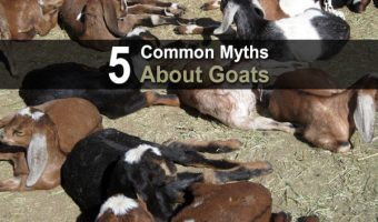 5 Myths About Goats