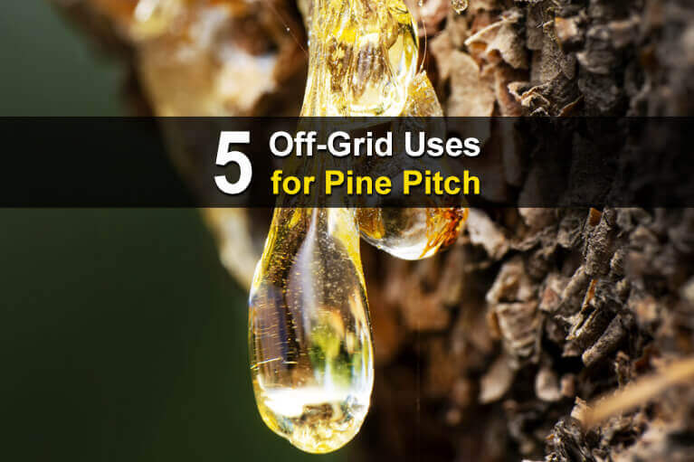 5 Off-Grid Uses for Pine Pitch