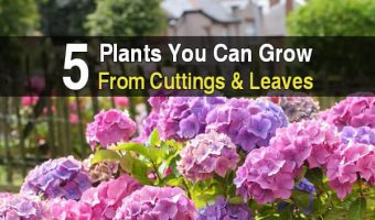 5 Plants You Can Grow From Cuttings & Leaves