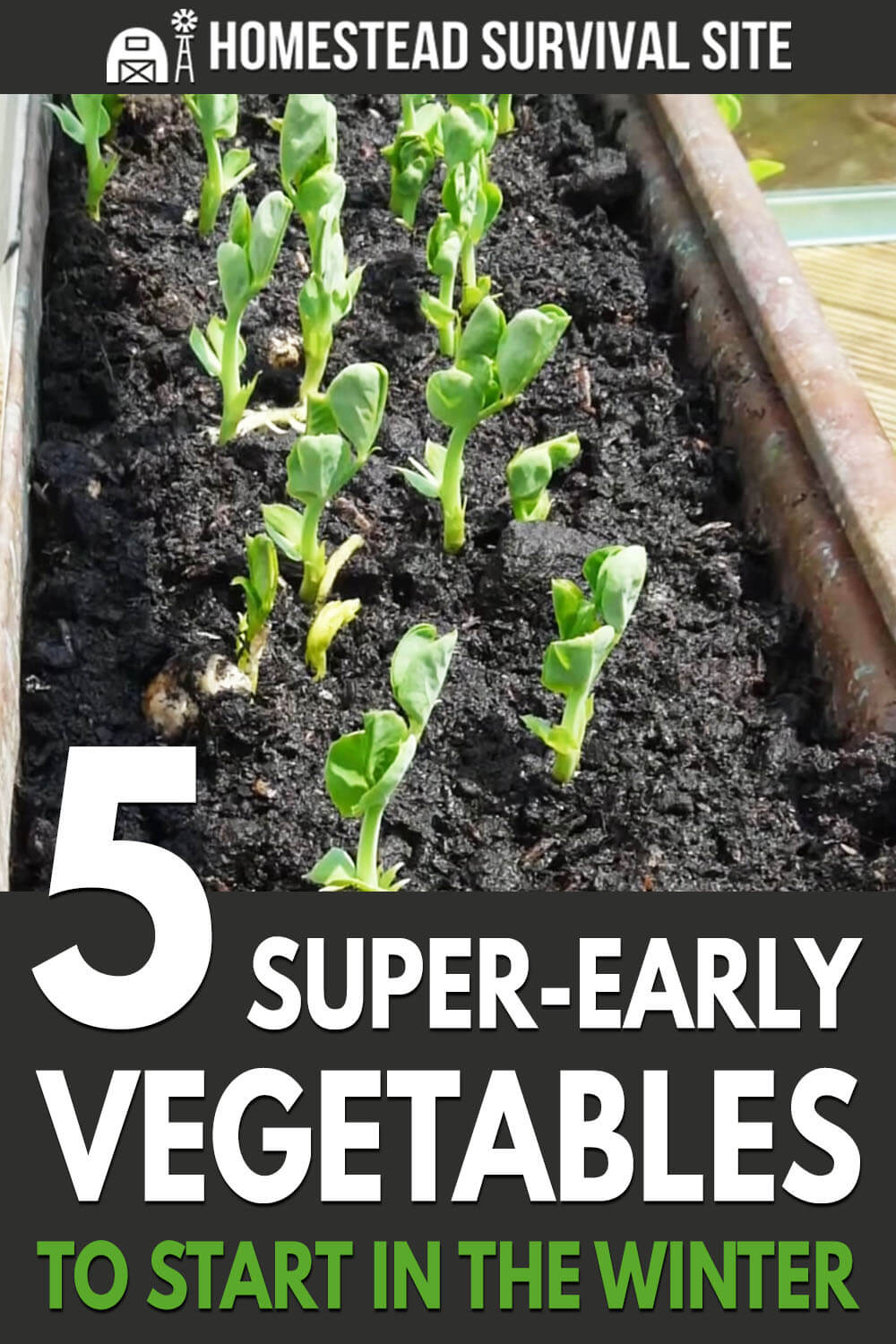 5 Super-Early Vegetables to Start in the Winter