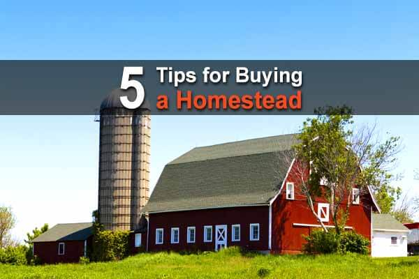 5 Tips for Buying a Homestead