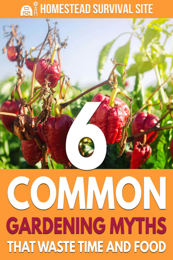 6 Common Gardening Myths That Waste Time and Food