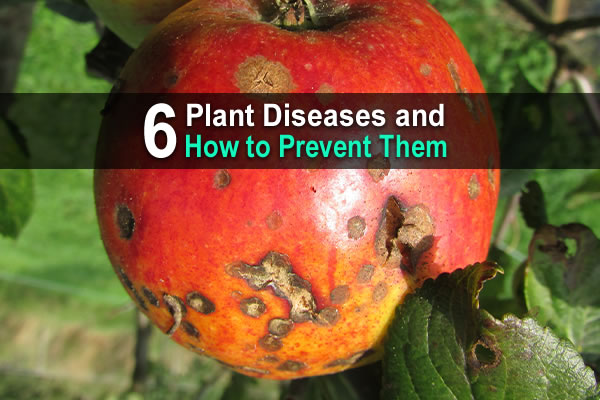 6 Plant Diseases and How to Prevent Them