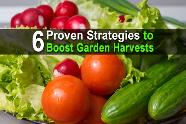 6 Proven Strategies to Boost Garden Harvests