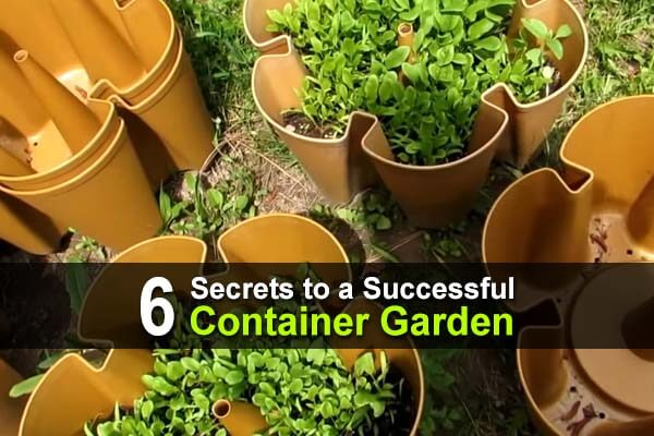 6 Secrets to a Successful Container Garden