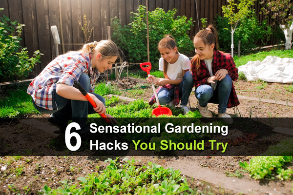 6 Sensational Gardening Hacks You Should Try