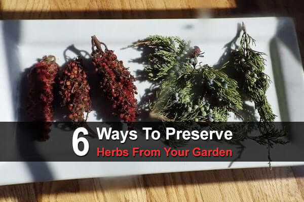 6 Ways To Preserve Herbs From Your Garden