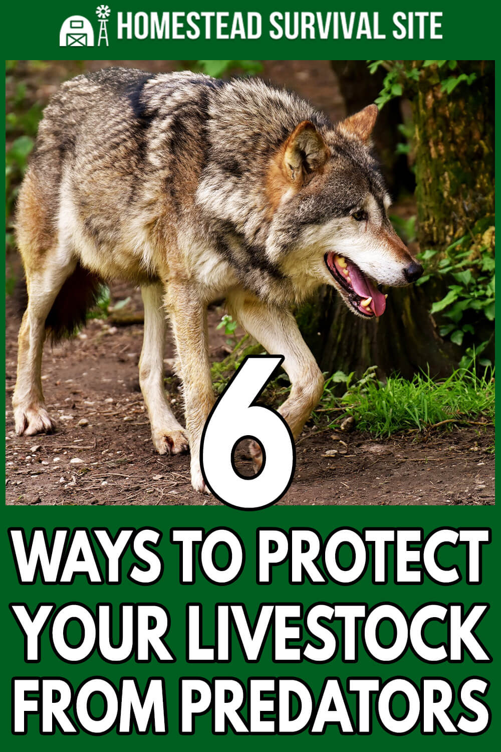 6 Ways to Protect Your Livestock from Predators