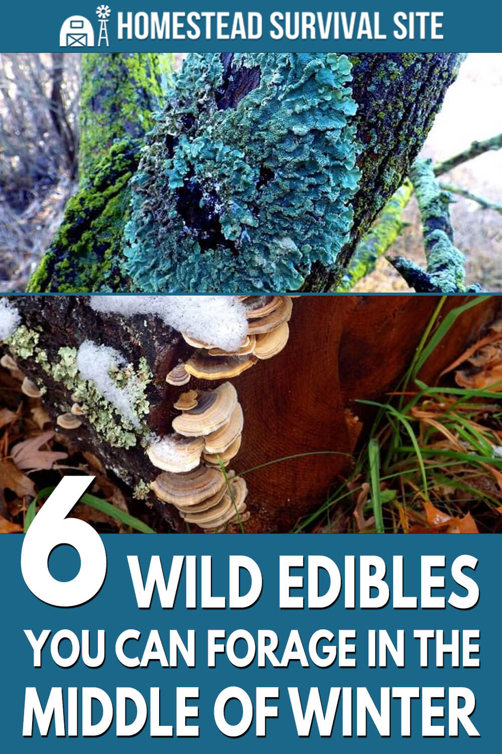 6 Wild Edibles You Can Forage In The Middle Of Winter