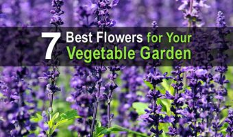 7 Best Flowers for Your Vegetable Garden