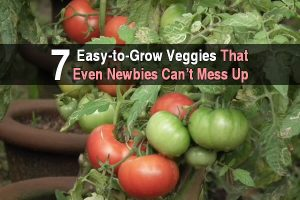 7 Easy-to-Grow Veggies That Even Newbies Can't Mess Up
