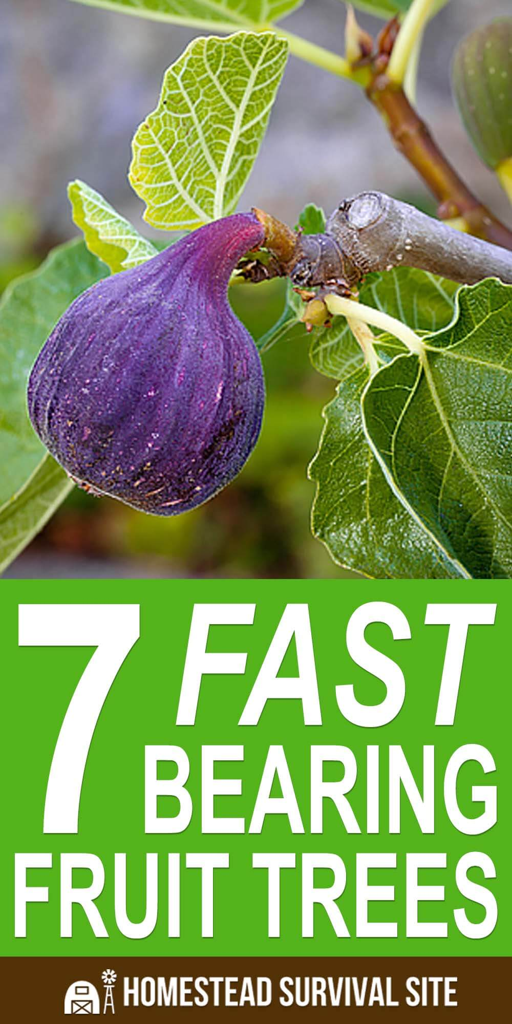 7 Fast Bearing Fruit Trees