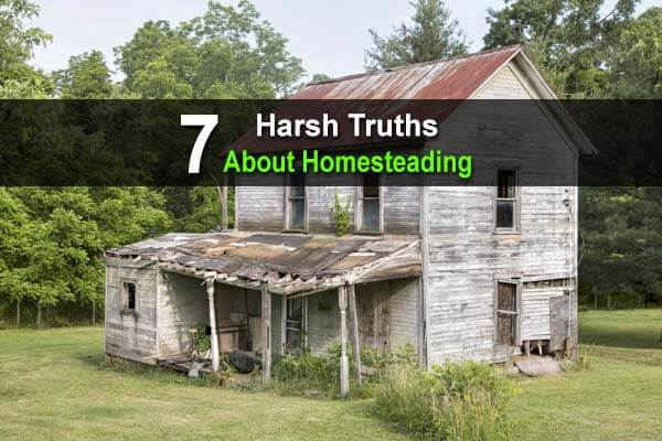 7 Harsh Truths About Homesteading