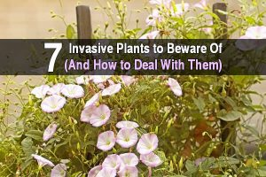 7 Invasive Plants to Beware Of (and How to Deal With Them)