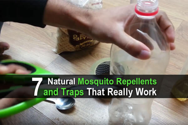 7 Natural Mosquito Repellents and Traps That Really Work
