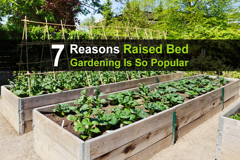 7 Reasons Raised Bed Gardening Is So Popular