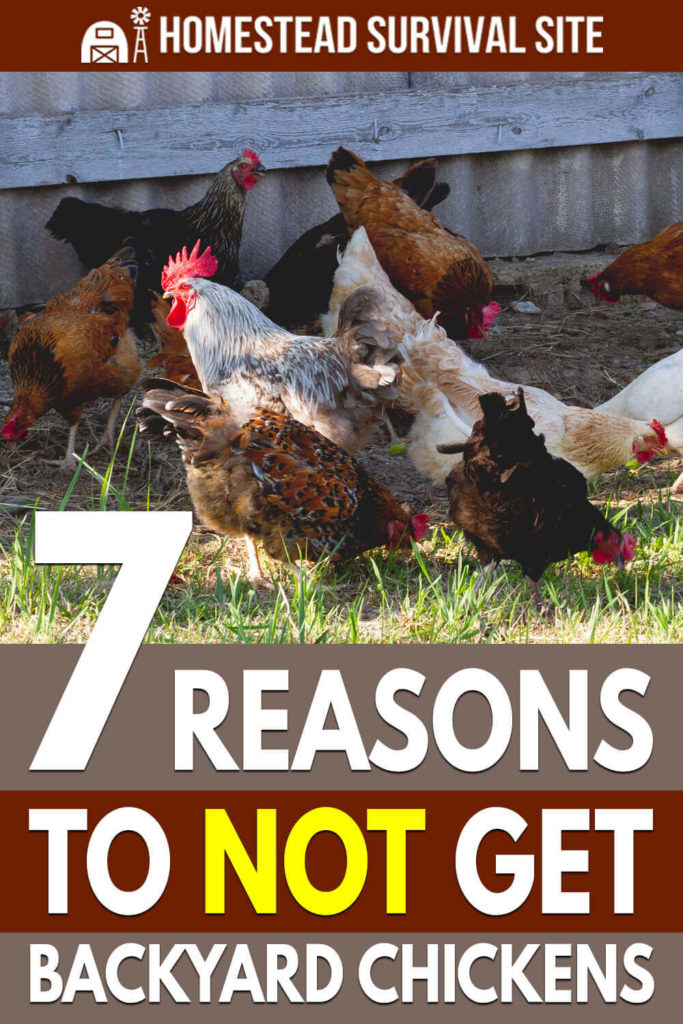 7 Reasons To NOT Get Backyard Chickens