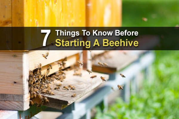 7 Things To Know Before Starting A Beehive