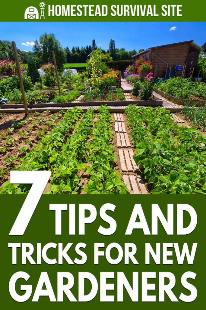 7 Tips and Tricks for New Gardeners