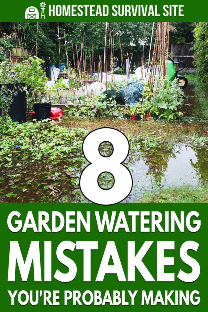 8 Garden Watering Mistakes You're Probably Making