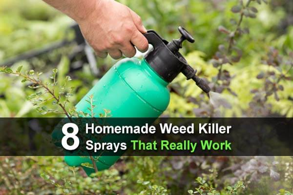 8 Homemade Weed Killer Sprays That Really Work