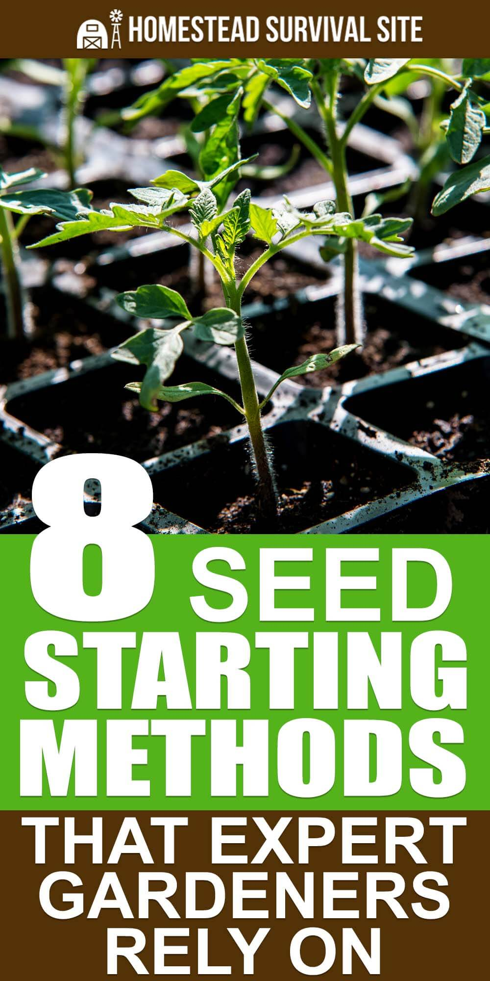 8 Seed Starting Methods That Expert Gardeners Rely On