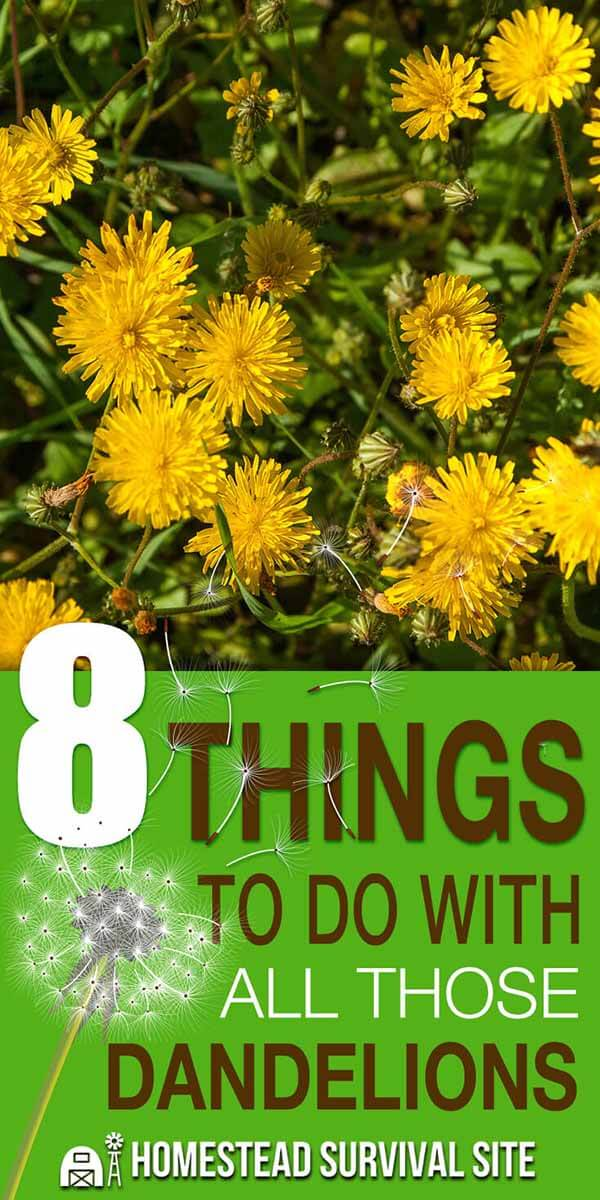 8 Things To Do With All Those Dandelions
