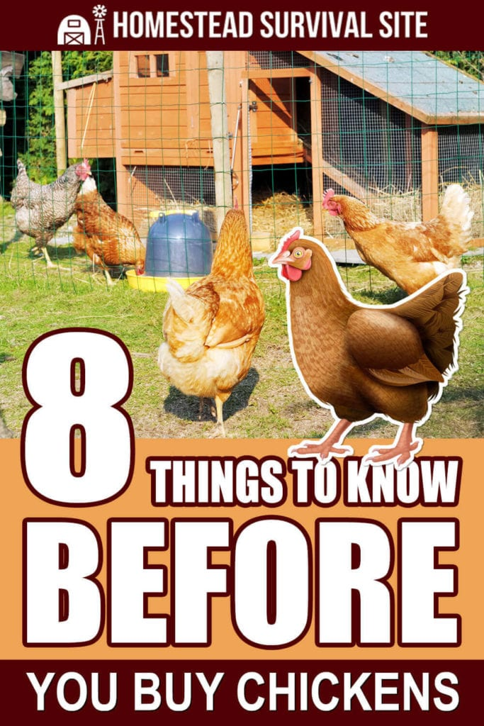 8 Things To Know BEFORE You Buy Chickens