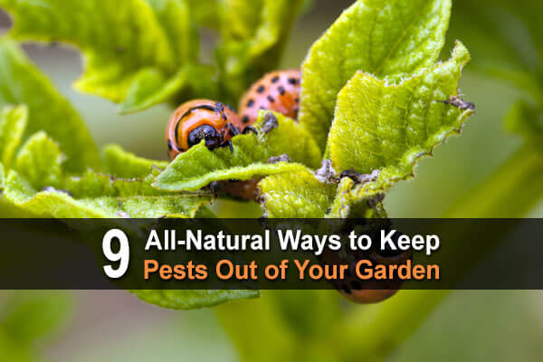 9 All-Natural Ways To Keep Pests Out Of Your Garden