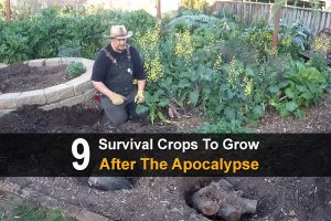 9 Survival Crops To Grow After The Apocalypse