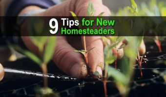 9 Tips for New Homesteaders