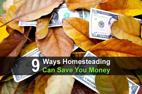 9 Ways Homesteading Can Save You Money