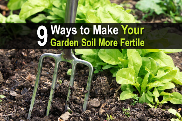9 Ways to Make Your Garden Soil More Fertile