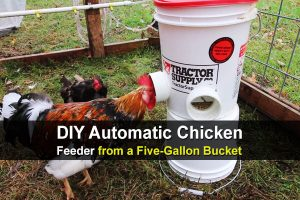 DIY Automatic Chicken Feeder from a Five-Gallon Bucket