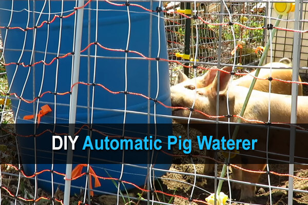 DIY Automatic Pig Waterer