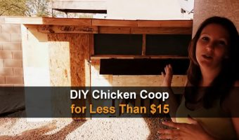 DIY Chicken Coop for Less Than $15