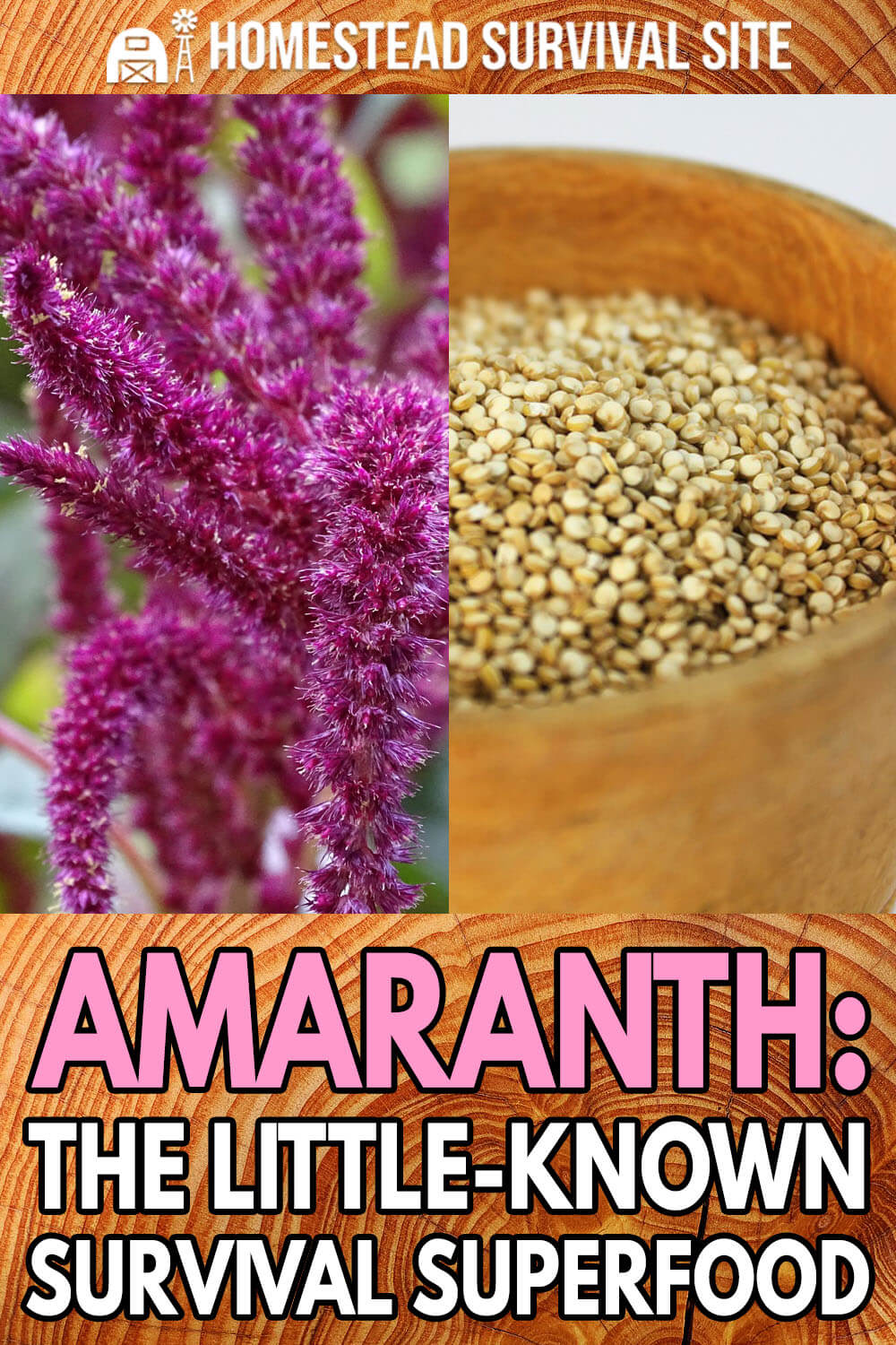 Amaranth: The Little-Known Survival Superfood