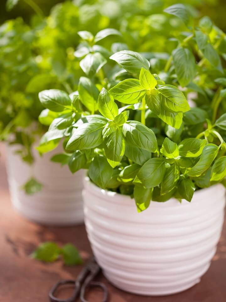 13 Best Medicinal Herbs You Can Grow In Your Home