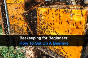 Beekeeping for Beginners: How To Set Up A Beehive