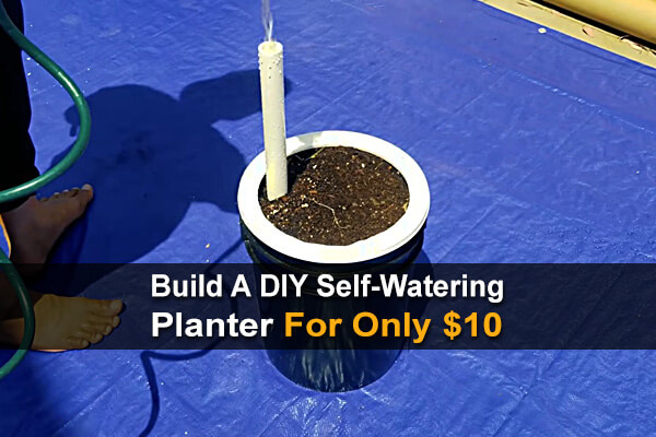 Build A DIY Self-Watering Planter For Only $10
