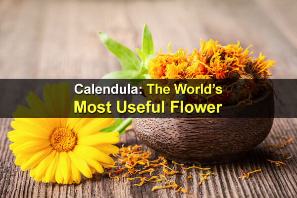 Calendula: The World's Most Useful Flower