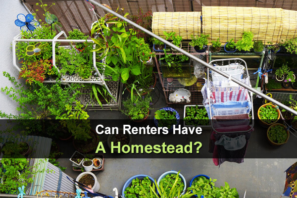Can Renters Have A Homestead?