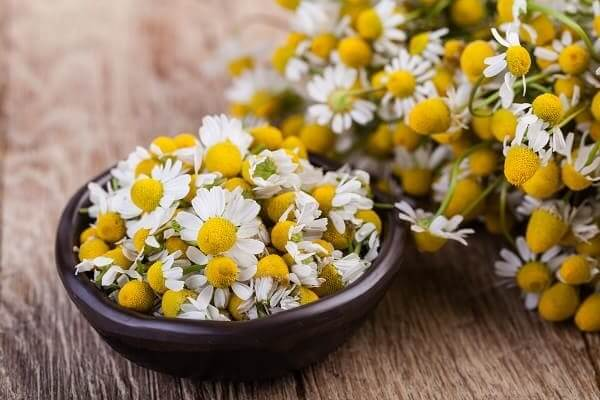 Chamomile in a Bowl