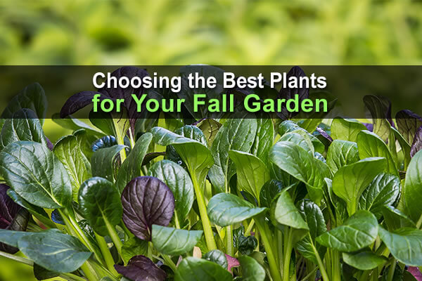 Choosing the Best Plants For Your Fall Garden