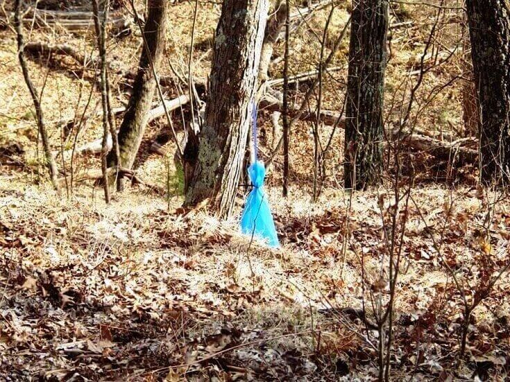 Collecting Sap In Bag