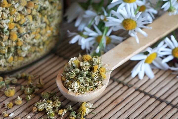 Dried Chamomile in Wooden Spoon