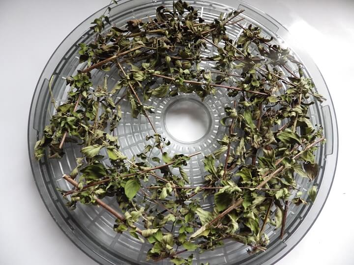 Dried Herbs on Dehydrator Tray